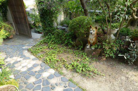 和風のイメージを残した庭